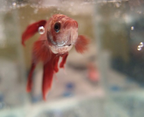 fishie-1402810